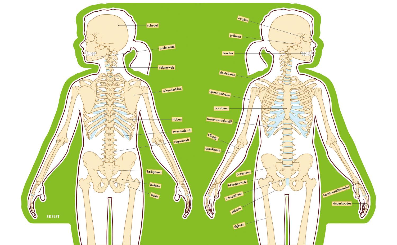 childrens anatomy atlas